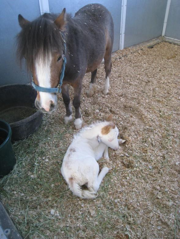 Hosptial Newborn2