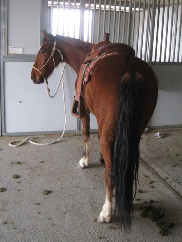 Training LF Saddled