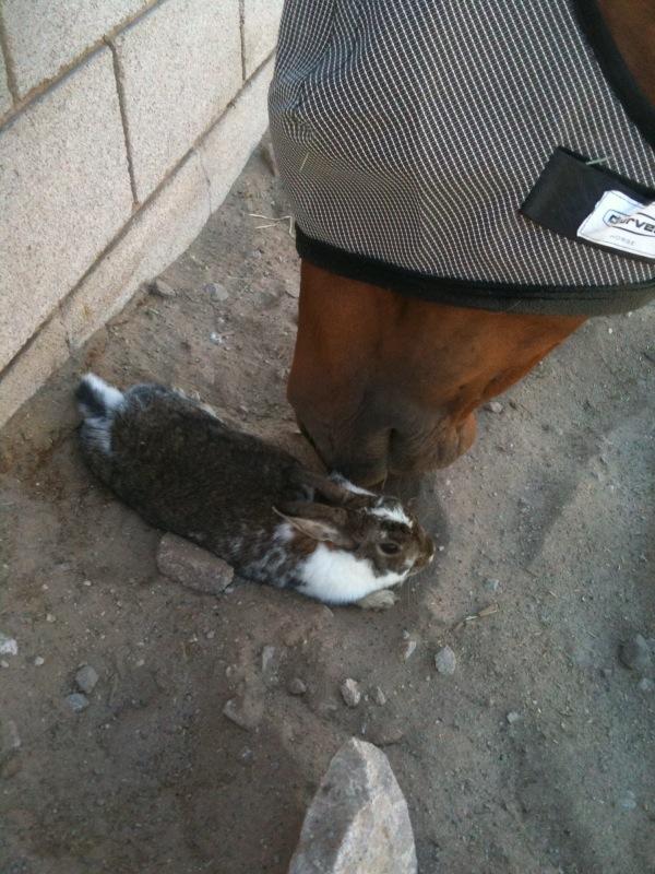 Garnetts Bunny 2